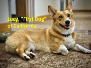 first dog of California